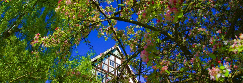 Zauberhafter Frühlingsaugenblick auf dem Gallhof Schaumburg