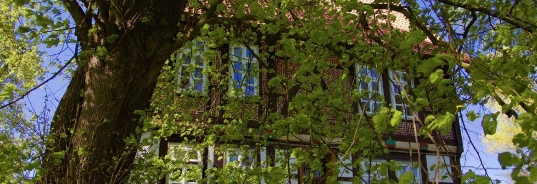 Der Frühling hält Einzug auf dem Gallhof