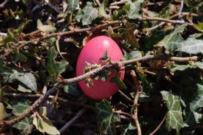 Frühling und Ostern auf dem Gallhof